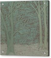 Forked Tree Acrylic Print