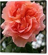Formidable Bloom Acrylic Print