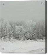 Forrest Of Frost Acrylic Print