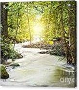 Forrest Stream Acrylic Print