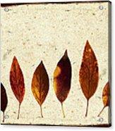 Forsythia Leaves In Fall Acrylic Print