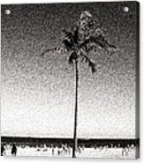 Fort Lauderdale Palm Tree Acrylic Print