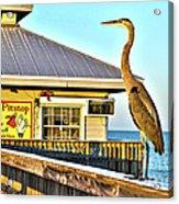 Fort Myers Beach Bird On Pier Acrylic Print