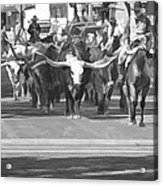 Fort Worth Herd Cattle Drive Acrylic Print