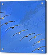 Forteen In Flight Acrylic Print