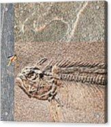 Fossil Fishing Acrylic Print