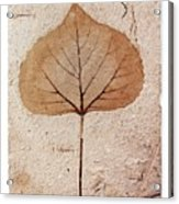 Fossil Leaf Acrylic Print