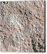 Fossiliferous Limestone Acrylic Print