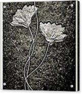 Fossilized Flowers Acrylic Print