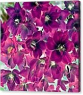Found Rose - Photopower 1742 Acrylic Print
