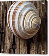 Found Sea Shell Acrylic Print by Garry Gay