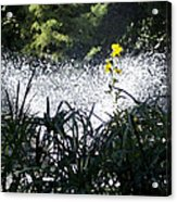 Fountain And Spring Flowers Acrylic Print
