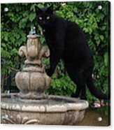 Fountain Cat Acrylic Print