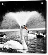 Fountain Swan Acrylic Print