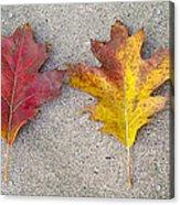 Four Autumn Leaves Acrylic Print