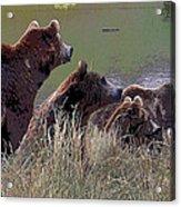 Four Bears Acrylic Print