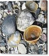 Four Beautiful Shells Acrylic Print