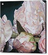 Four Blooms 45 X 80cm Acrylic Print