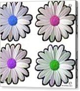 Four Daisy Hibrids Acrylic Print