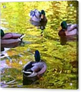 Four Ducks On Pond Acrylic Print