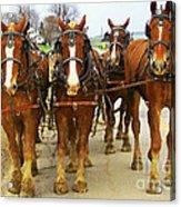 Four Horse Power Acrylic Print by B Wayne Mullins