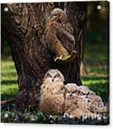 Four Owl Chicks In A Dark Forest Acrylic Print