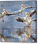 Four Pelican Landing Watercolor Effect Acrylic Print