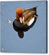 Fowl Ginger Acrylic Print