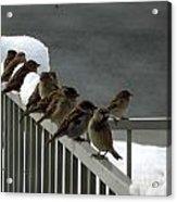 Fowl Weather Friends Acrylic Print