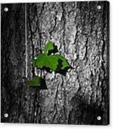 Fox Grape On Pine Acrylic Print