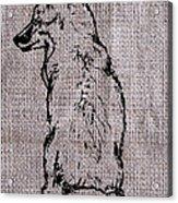 Fox On Burlap  Acrylic Print