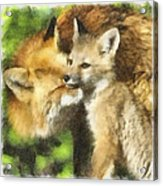 Fox One Acrylic Print