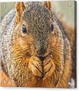 Fox Squirrel Acrylic Print