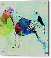 Fox Terrier Watercolor Acrylic Print by Naxart Studio