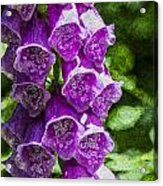 Foxgloves Textured Acrylic Print