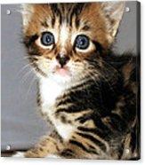 Foxy The Kittens Big Eyes Acrylic Print