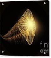 Fractal 013-4 Acrylic Print