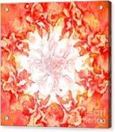 Fractal Carnation Acrylic Print
