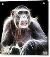 Fractal Chimp Acrylic Print