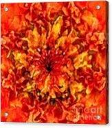 Fractal Chrysanthemum Acrylic Print