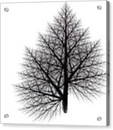 Fractal Essence Of A Tree Acrylic Print