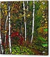 Fractal Forest Acrylic Print