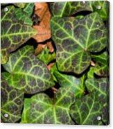Fractal Ivy Acrylic Print
