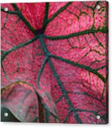 Fractal Micropolis Acrylic Print
