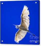 Fractal White Egret Acrylic Print