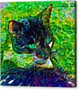 Fractalias Feline Acrylic Print