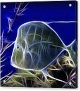 Fractalius Aquatic Fish Acrylic Print