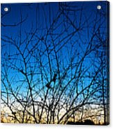 Fractured Sunset Acrylic Print