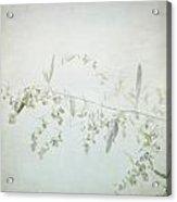 Fragile - British Columbia - Square Acrylic Print
