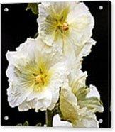 Fragile Flower Acrylic Print